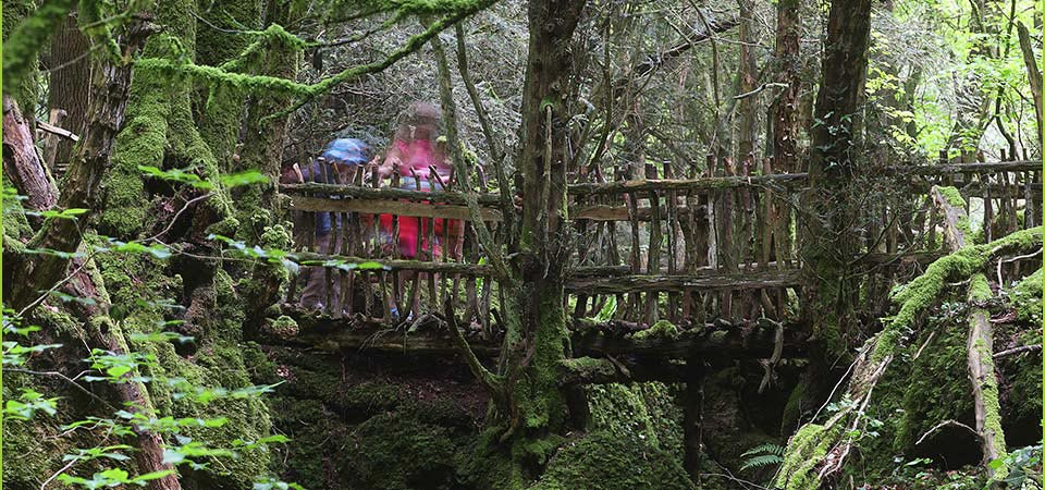Puzzlewood is open daily from 10am...please note if winds are above 25mph we must remain closed...